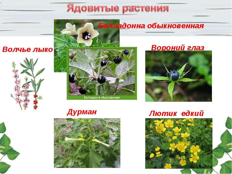 Play online ssbbw free porn