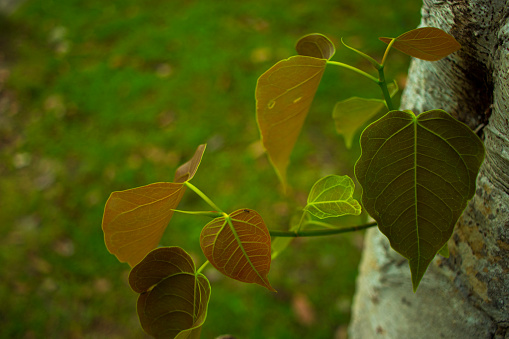 Young leaf photo gallery